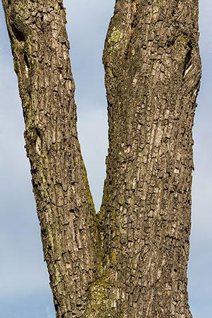 Cascade Tree Works offers Hazard Tree Assessment in Portland OR Gresham Beaverton Vancouver WA Camas Battle Ground